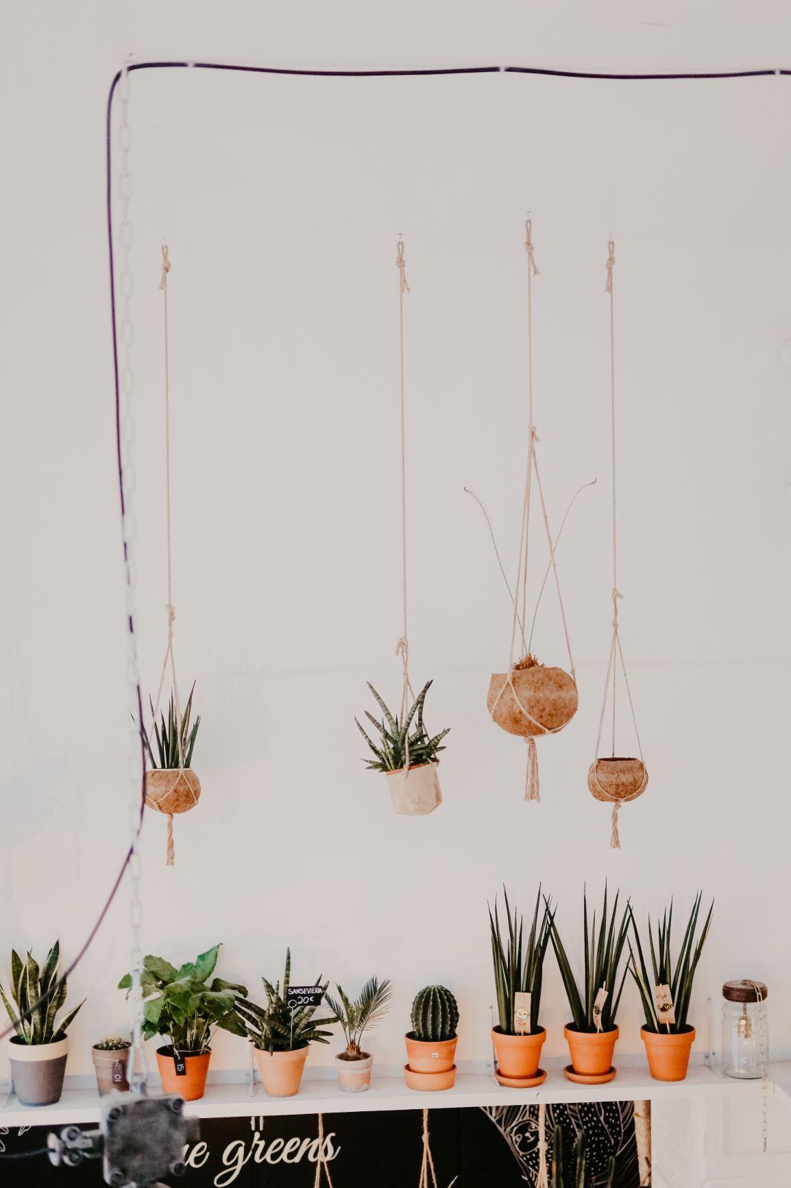 Unusual garden decoration